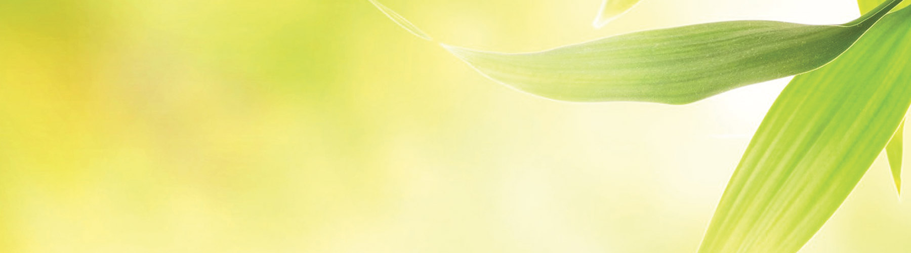 Home-sfondo4-web